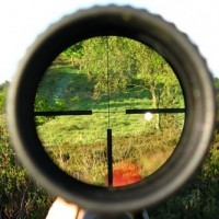 Ловът като томително и изкусително познание за живота