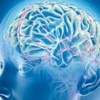 Мозъкът ни произвежда лекарства - мисълта лекува
