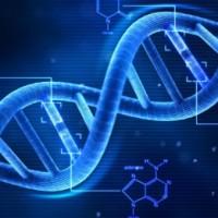 Какво образование ще завърши човек - зависи от ДНК